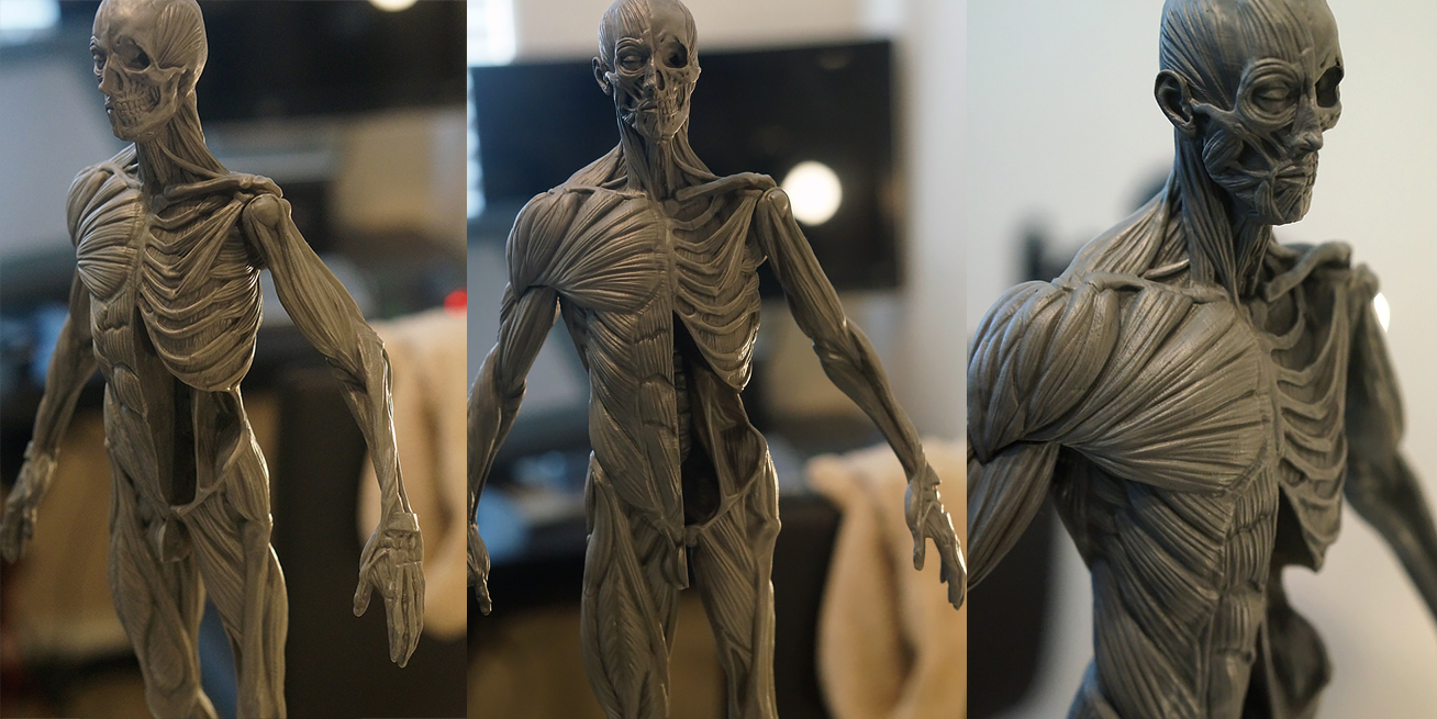 Anatomy Male And Female Figures Avaible For Buying 3dtotal